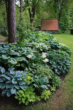The hosta border Garden, Shade garden, Backyard landscaping desig. Back Gardens, Outdoor Gardens, Shade Garden Plants, Shaded Garden, Hosta Plants, Woodland Garden, Forest Garden, Garden Cottage, Garden Beds