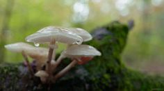 cinemagraph gif nature photography cinemagraph rain forest drop cinemagraphs mushrooms drops log living stills drips