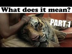 Movie quote life of pi movie quotes pinterest for Life of pi analysis