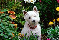 El robot emocional: Al meu gos li agraden les flors...