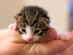 Very little kitty and very cute.