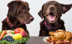 Ποιές είναι οι καλύτερες τροφές σκύλων; [Αξιολόγηση 2020] - Petvet24 Eating Alone, Dog Eating, Boiled Chicken And Rice, Boil Chicken, Service Dogs Breeds, Instant Pot, Vegan Dog Food, Dog Diet, Animal Nutrition