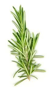 Delicious health benefits of #rosemary