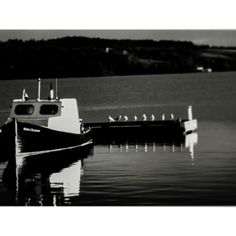 Nautical seagulls in monochrome Monochrome, Nautical, Photography, Navy Marine, Photograph, Monochrome Painting, Photography Business, Photoshoot, Fotografie