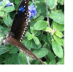 Cecil B Day Butterfly Garden At Callaway Gardens.