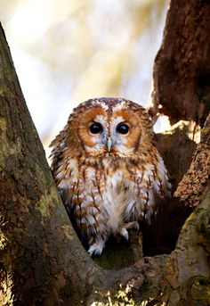 Cute little guy.  If you know what kind, please leave comment.  #owl #bird