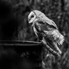 """""""Wild Barn Owl"""" by Laith Khalaf. A stunning black and white fine art print from Laith's latest collection inspired by nature. View more of Laith's work on FineArtSeen l The Home Of Original Art"""