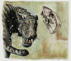 Shadowcat! • Homotherium serum – Tempera and digital 2008 – Prehistoric Times magazine by Davide Bonadonna