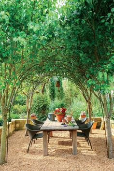 In the midst of notoriously arid Austin grows an evergreen escape perfect for wandering. A Texas persimmon towers over the garden, casting shimmering shadows on