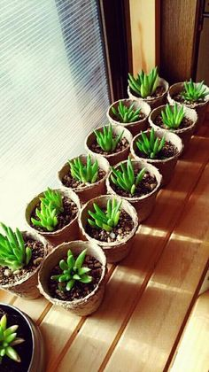 鉢の底に穴がある場合は、ネットと新聞を入れるのがおすすめ。 Planting Succulents, Succulent Plants, Outdoor Gardens, Green, Flowers, Gardening, Design, Succulents, Lawn And Garden