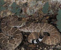 Sonoran Reptile Identifications