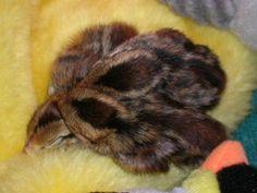 RSCN0751.JPG hatching quail