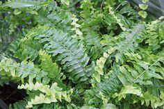Viete, ktoré rastliny vás doma ochránia pred škodlivými látkami? | Môjdom.sk Pixies, Herbs, Herb, Medicinal Plants