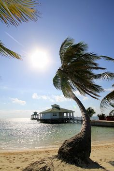 Palm tree and the ocean. Belize, Belize - Travellerspoint Travel Photography