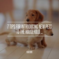 7 Tips for Introducing New Pets to the Household ...