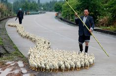 Bilder des Tages: Bezirk Changzhou, Provinz Shandong, China,