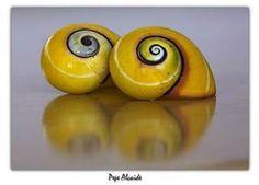 polymitas - Bing Images