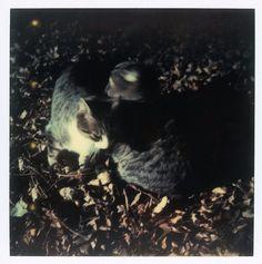 Polaroid by Andrei Tarkovsky Lot 13 - Polaroid 1