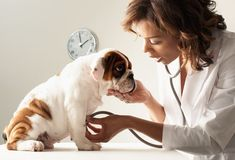 East Dallas Pet Rescue Most excellent service provider.  Think about how you will feel once you stop paying high prices for medicine your pet doesn't really need or for things you can you can easily do yourself in the comfort and of your own home.