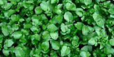 Terapyzen: As propriedades das plantas