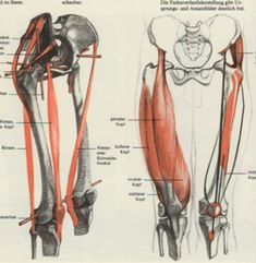 leg anatomy Leg Anatomy, Anatomy Bones, Gross Anatomy, Human Anatomy Drawing, Anatomy Study, Body Reference, Anatomy Reference, Art Reference, Male Figure Drawing