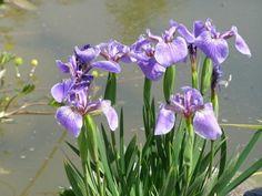 Kleinen Garten Blumen Pflanzen