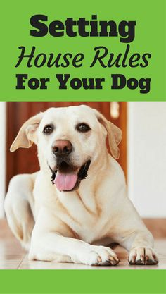 Useful Dog Obedience Training Tips – Dog Training Training Your Puppy, Brain Training, Dog Training Tips, Potty Training, Training Quotes, Training Schedule, Background Grey, Dog Minding, Easiest Dogs To Train