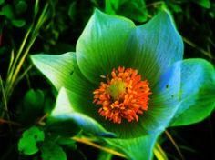 flower :-)