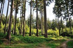 Jizerské hory   Trniště a Harcovský les Country Roads, Plants, Plant, Planets