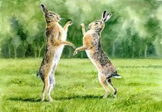 A watercolour by Sylvia Twiss Watercolours, Hare, Boxing, Kangaroo, Turtle, Paintings, Gallery, Funny, Prints