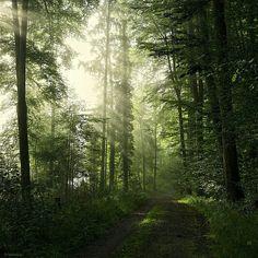 (2) Nature - Timeline