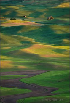 Palouse wheat fields from Steptoe Butte, Washington.