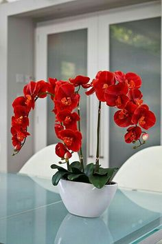 50 pcs/bag orchid seeds bonsai Butterfly phalaenopsis orchid potted flower seeds perennial garden plant for home garden flowers Orchid Seeds, Flower Seeds, Flower Pots, Exotic Flowers, Amazing Flowers, Beautiful Flowers, Red Orchids, Orchids Garden, Orchid Pot