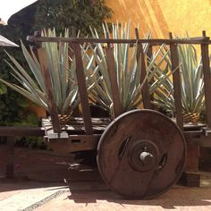 Loving this rustic cart with agave! Perfect prop for a Cinco de Mayo #fiesta #EsperanzaCincoDeMayo