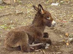 Baby donkey...By:laarq