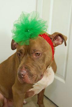 Christmas Dog Headband by courtanai on Etsy, $12.00