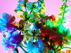 Torkil Gudnason Floral series
