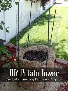 Gardening DIY   Gardening Steps