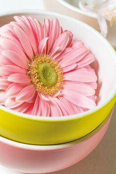 One small pink gerbera inside a yellow bowl #pinkgerberas #whitegerberas #floral #flower #inspiration #colouredbygerbera #dutchgerbera