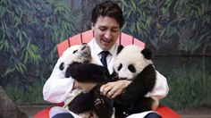 Canada Fears Photo of Prime Minister with Pandas Could Worsen American Refugee Crisis - The New Yorker