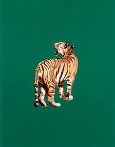 """Draw Tigers """"Tiger,"""" 1985 by Sarah Charlesworth. -Wmag - The late artist and BOMB co-founder Sarah Charlesworth is experiencing something of a revival. See highlights from her new show here. Ps Wallpaper, Art Inspo, Collage Art, Cool Art, Art Photography, Digital Art, Illustration Art, Sketches, Deviantart"""