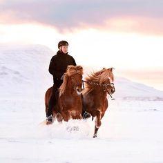 Bekijk deze Instagram-foto van @horsesoficeland • 85 vind-ik-leuks