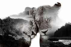 Here I have a beautiful collection of most amazing double exposure photography portraits by French artist Nevess. Photoshop Photography, Underwater Photography, Creative Photography, Animal Photography, Amazing Photography, Portrait Photography, Nature Photography, Digital Photography, Photography Ideas