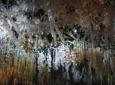 Ephiphyte Membrane, Philip Beesley