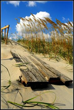 At the beach... Florida Sea Oats