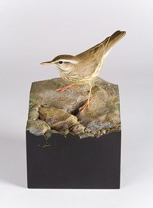 """Waterthrush"" Warbler Art by Larry Barth"