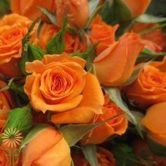 Kelly Spray Roses | Wholesale Flowers & DIY Wedding Flowers Orange Flowers, Colorful Flowers, Orange Color, Diy Wedding Flowers, Diy Flowers, Spray Roses, Flowers Online, Bloom, Pure Products