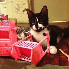 Oh não! Uma pantera malhada destruindo o quarto do bebê! E agora? 🙀#gatosdeinstagram #barbie #carlota