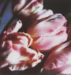 cy twombly, tulips 1993. oh my gosh my favorite....for sure