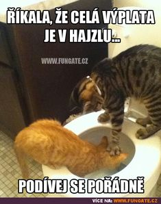 best memes Cats are cute and sometimes unintentionally do stupid funny things, so we have collected some the funniest and most hilarious cat memes and pictures hope you will enjoy em. Cute Kittens, Silly Cats, Cats And Kittens, Animals And Pets, Funny Animals, Cute Animals, Funny Cat Memes, Funny Cats, Dog Cat